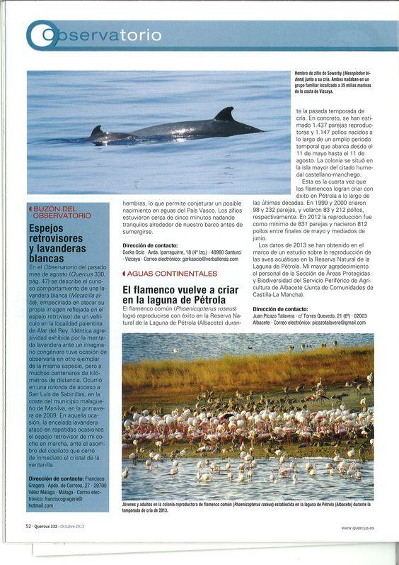 Nota sobre la reproducción del flamenco Común en la Laguna de Pétrola (Chinchilla de Montearagón-Pétrola), durante el año 2013. Aparecida en el número 332 de la Revista QUERCUS, página 52.