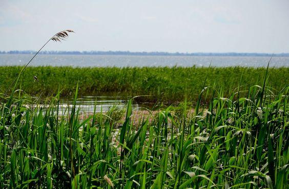 Заросший берег залива. Права на фотографии принадлежат их авторам или владельцам