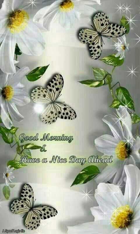 Good Morning All My Dear Friends : Good morning my dear friend just as your simple reminders