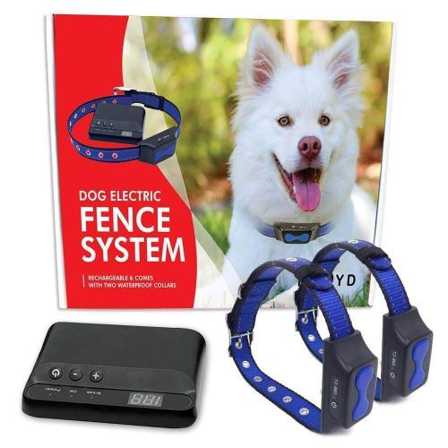 Floyd Invisible Electric Fence For Dogs Perimeter Fence Prevents Pets Escaping Electric Fence Dog Fence Wireless Dog Fence