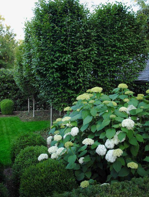 Tone on tone summer whites gardens pinterest for Garden designs with hydrangeas