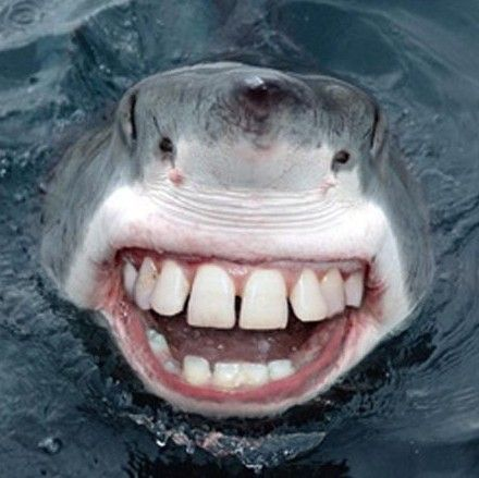 Teeth, Sharks and Google images on Pinterest