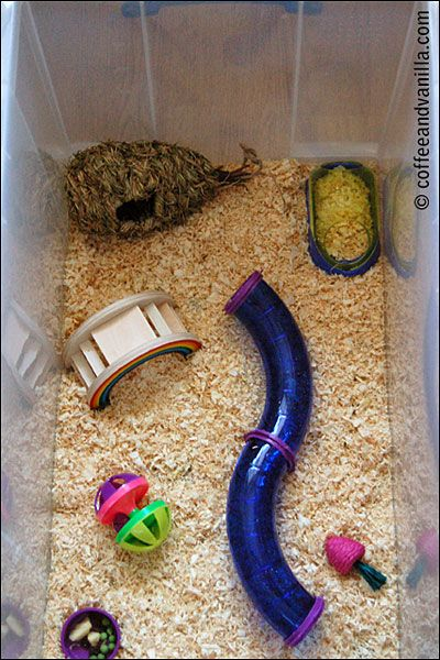 Hamsters playgrounds and boxes on pinterest for Hamster bin cage tutorial