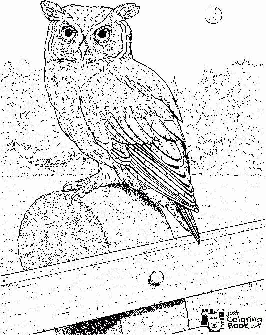 Free Owl Coloring Pages In Perched Long Eared Owl Coloring Pages Printable Bird Coloring Pages Coloring Pages Owl Coloring Pages