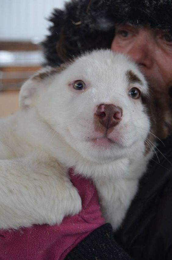 Zuhause Gefunden Kati Hunde Vermittlung Hunde In Not