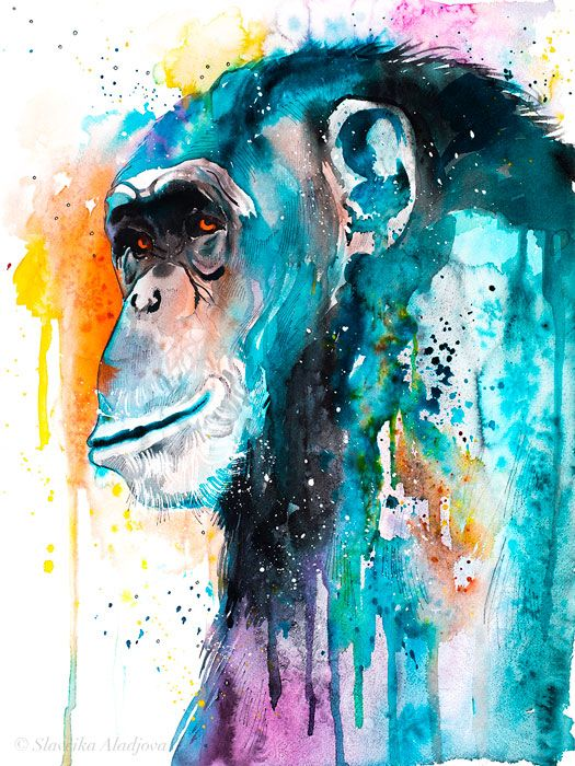 Colorful Chimp Chimpanzee Watercolor Painting Print By Slaveika