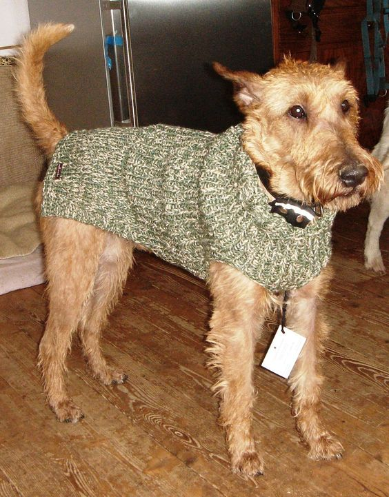 hundepullover f r boxer terrier retriever stricken und. Black Bedroom Furniture Sets. Home Design Ideas