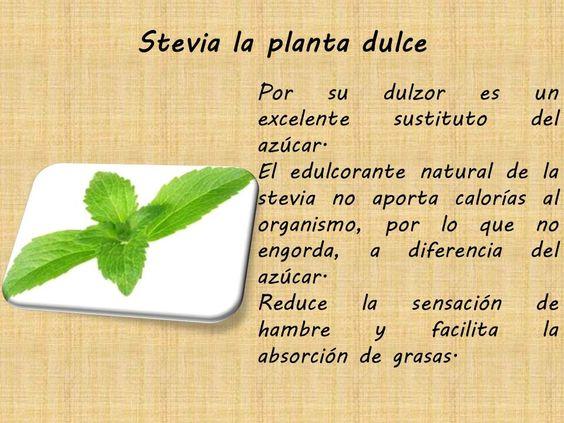 Planta dulce