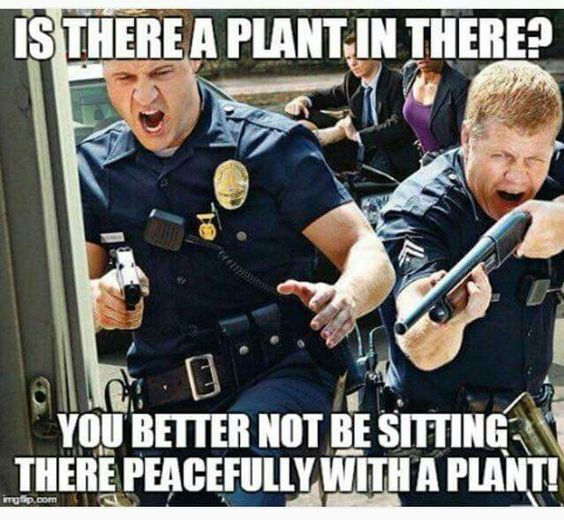 Marijuana is natural medicine