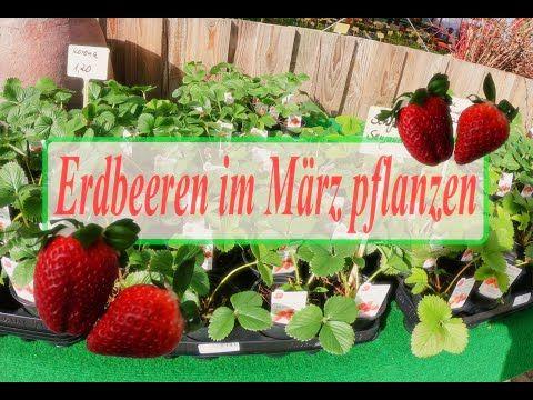 38++ Erdbeeren im maerz pflanzen ideen