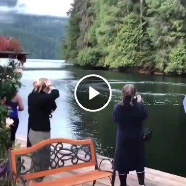 Golfinhos encantando turista no lago