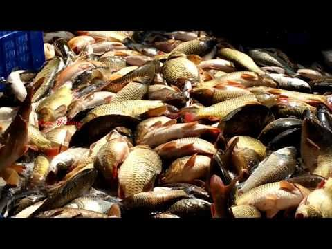 Wow Amazing Fish Video Live Fish Market Fresh Fish Market In