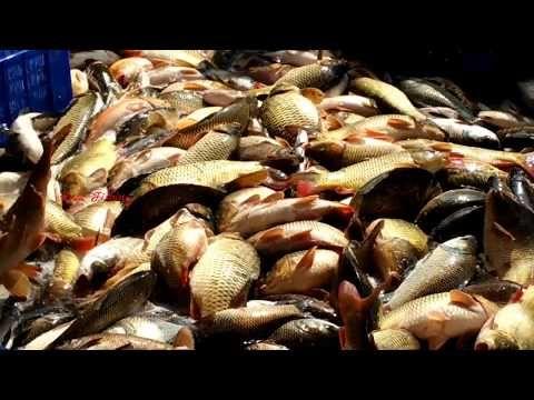 Wow Amazing Fish Video Live Fish Market Fresh Fish Market In