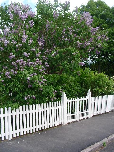 Staket staket rosor : Staket, men mest grinden!   Trädgård   Pinterest   Om