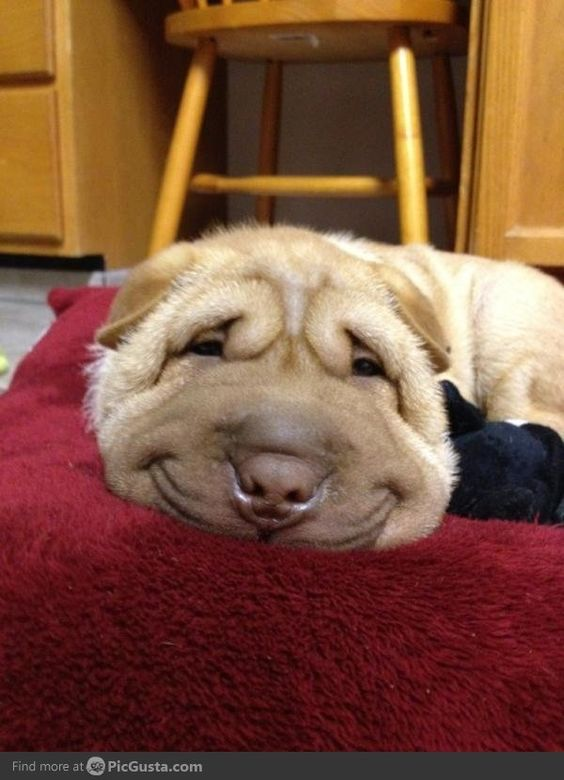 I smile like that when I fart, too.