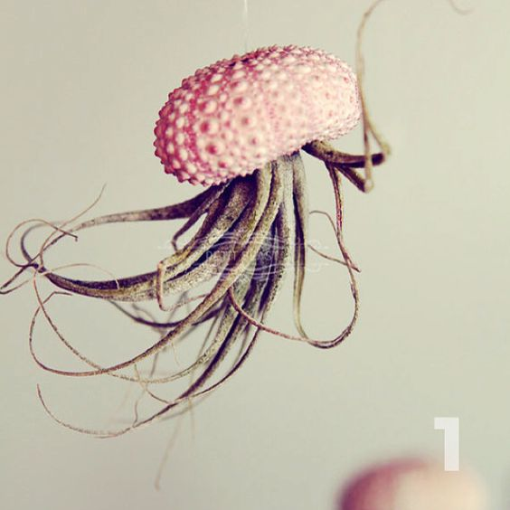 """Jellyfish Air Plant Holders 4 Pack: Tilandsia (airplant) And Sea Urchin """"jellyfish"""""""