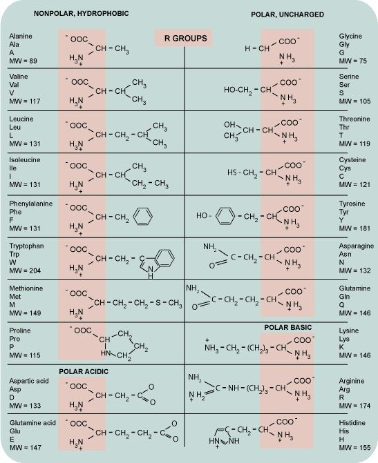 Amino Acids Chart, Handy For Any Biochem Major | Science