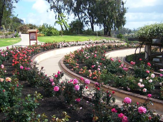 The Inez Grant Parker Memorial Rose Garden In Balboa Park