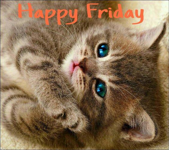 Happy Friday!!! Cute cat <img src=