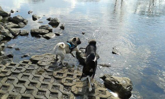 Hundeinsel Ruhr