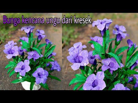 Cara Bikin Bunga Kencana Ungu Dari Kantong Kresek Youtube Euphorbia Plants Bunga