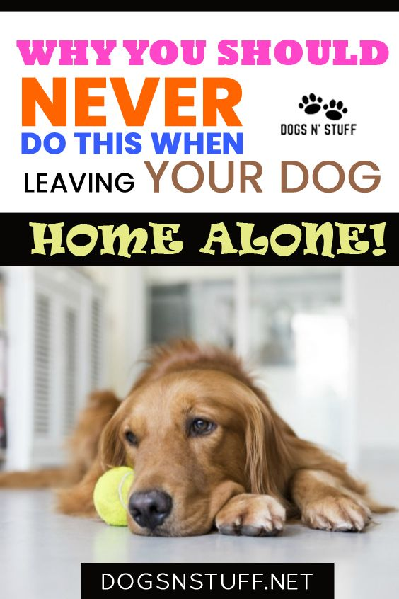 Why You Should Never Do This When Leaving Your Dog Home Alone Dogs N Stuff In 2020 Best Dog Toys Funny Dog Toys Dog Grooming