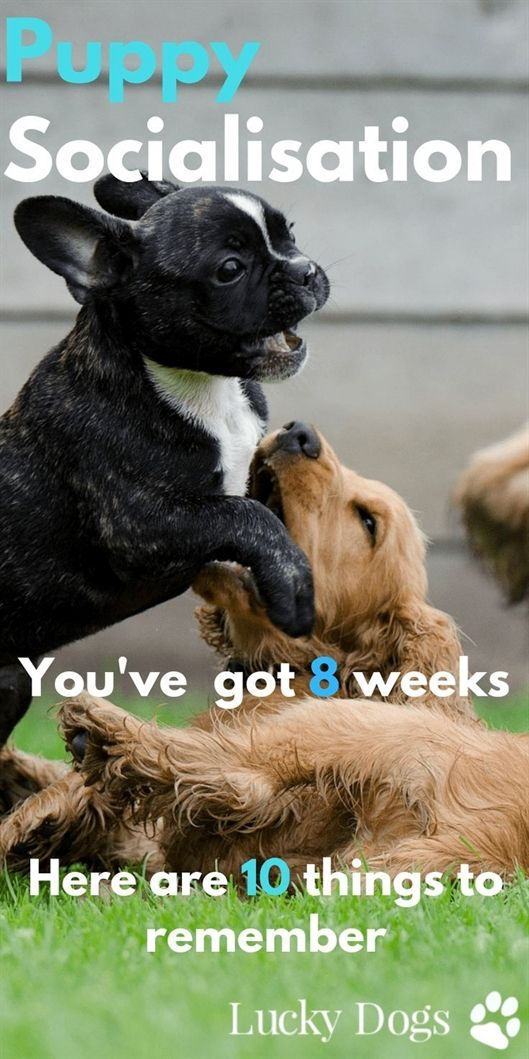 Dog Training Fort Wayne Dog Training Pads Xl Dog Training 33073