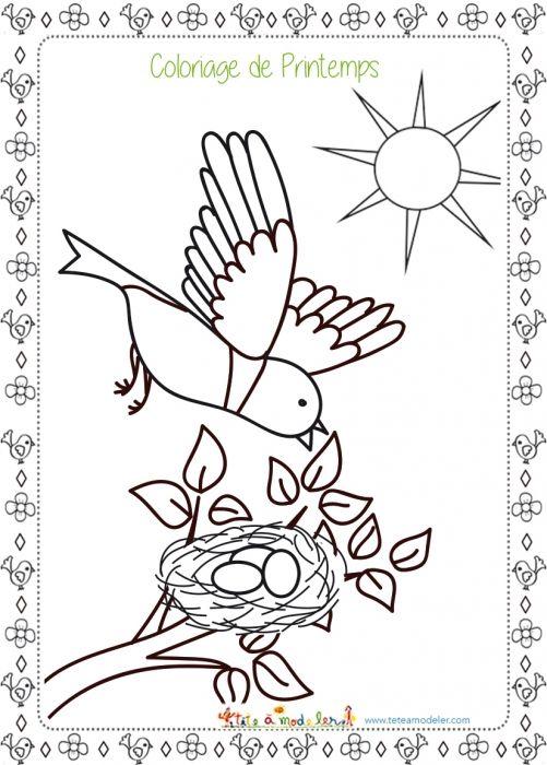 Coloriage Oiseaux Printemps