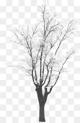 Winter Png Winter Transparent Clipart Free Download Black And White Line Point Angle Winter Tree Silhouette Winter Clipart Winter Trees White Flower Png