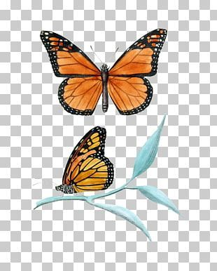 Background Brush Texture Png Clipart Background Black Brush Brush Clipart Grain Free Png Download In 2021 Monarch Butterfly Book Icons Textured Background