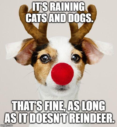Christmas Dog Jokes Dog Puns Dog Jokes Funny Puppy Memes
