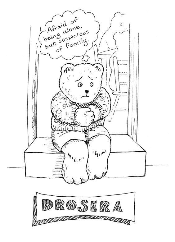 Drosera: