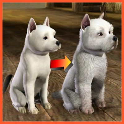 How Many Breeds Cats And Dogs Sims