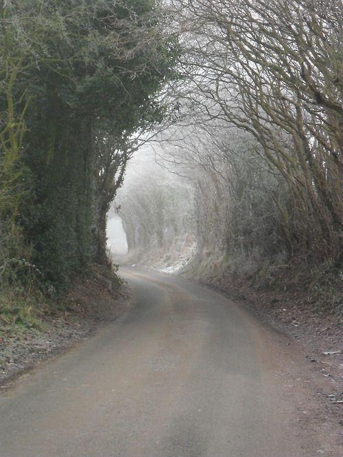 vwcampervan-aldridge:    Frosty archway on Hobs Hole Lane, Aldridge, Walsall, England