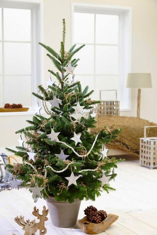 Weihnachtsbaum Im Topf Richtig Pflegen Und Noch Viele Jahre Bewundern Fresh Christmas Trees Small Christmas Trees Christmas Tree Decorations