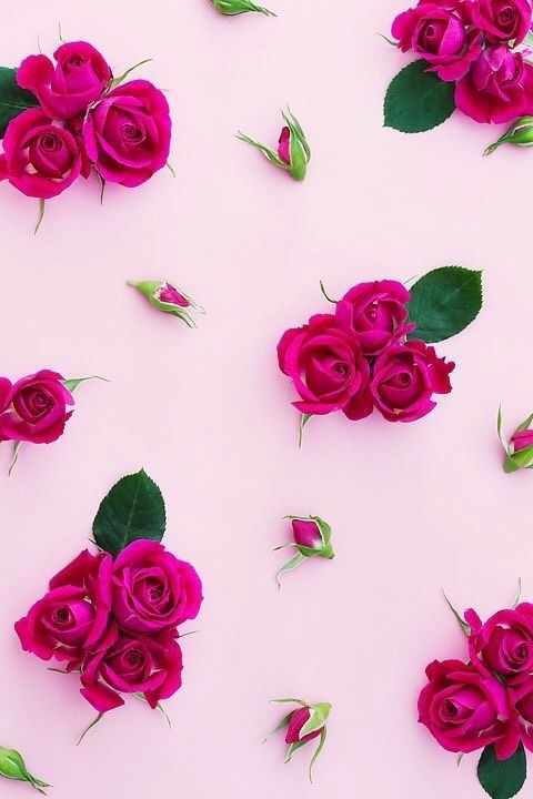 Immagine Di Rose Wallpaper And Pink Flower Phone Wallpaper Flower Backgrounds Flower Wallpaper