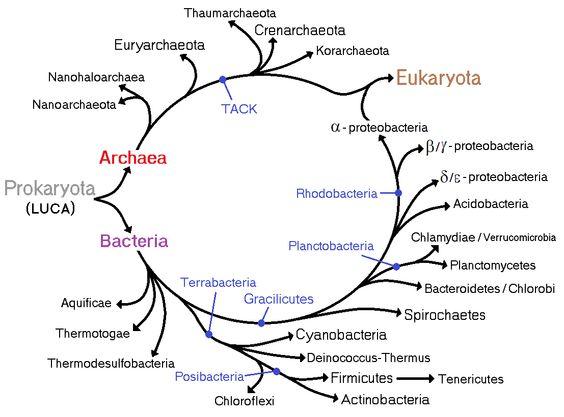 Resultado de imagen de luca antepasado comun