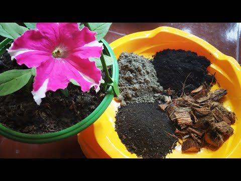 Pin By Aarushi Shrestha On Gardening In 2020 Plants For Hanging Baskets Garden Compost Hanging Plants