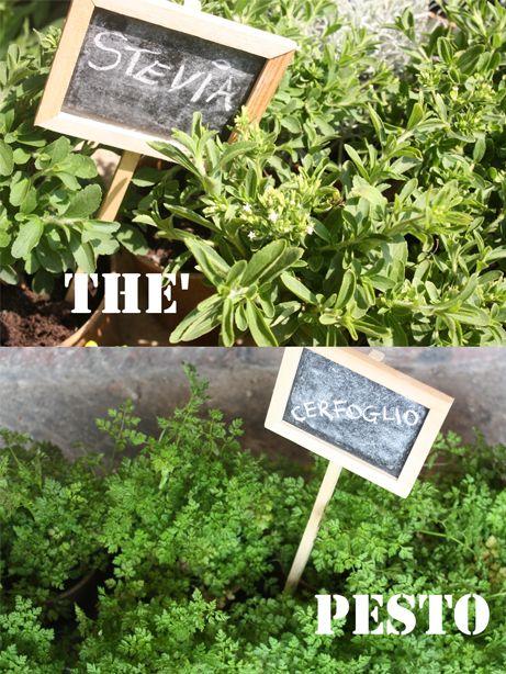 erbe aromatiche - aromatic herbs stevia, cerfoglio