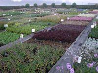 Profil - Plantes vivaces Guido Van de Steen