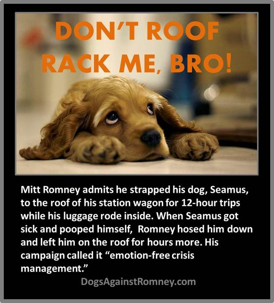 Even FOX News has said that what Mitt Romney did to his dog, Seamus, makes him unfit to be president.
