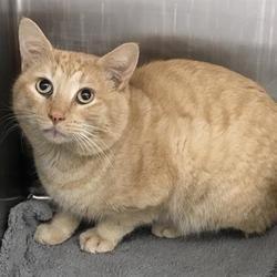 Pin By Rose Becerra On Cuteness In 2020 Pet Adoption Cat Adoption Kitten Adoption