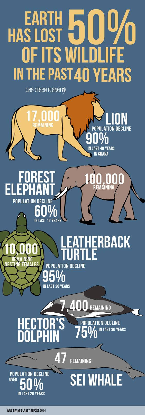 This Infographic on How Much Wildlife We've Lost in the Past 40 Years Will Shock You