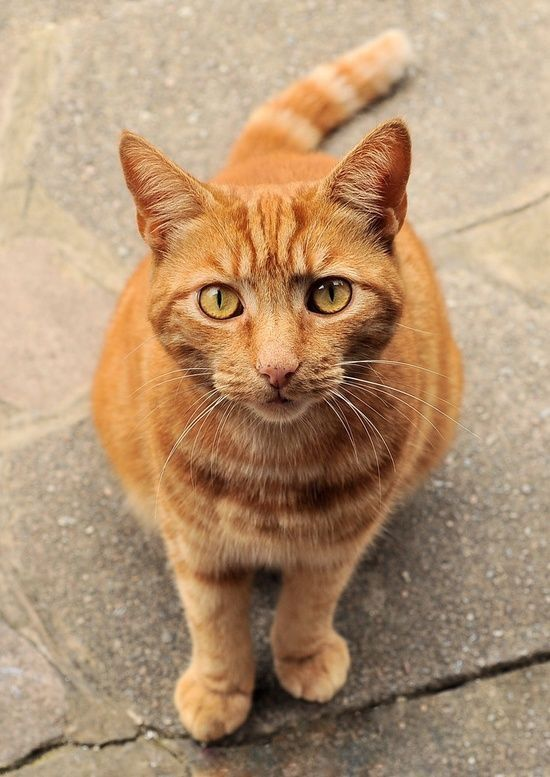 Pin By R2 On Cats Orange Tabbies Cute Cats And Kittens