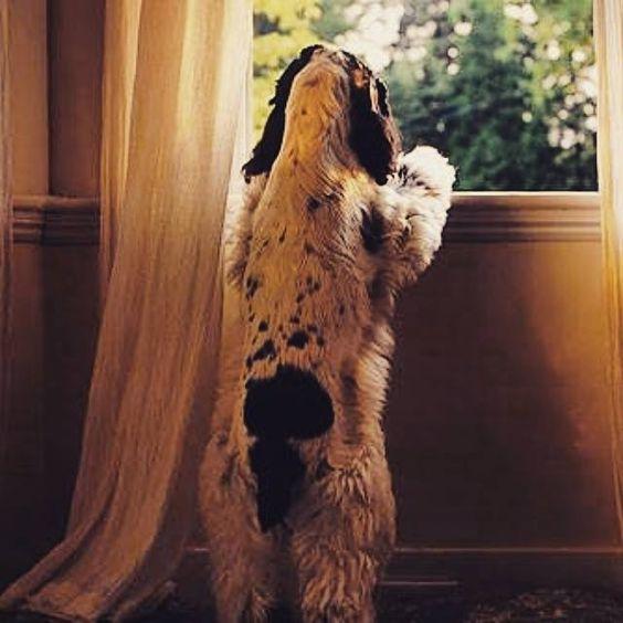 Você sente um aperto no coração na hora de sair para trabalhar e ter que deixar seu cachorro sozinho em casa o dia todo?