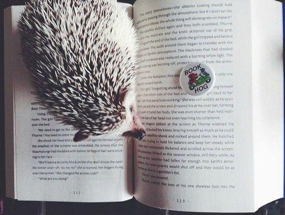 Ernest Hedgingway, the well-known bookish hedgehog, reading Marissa Meyer's CRESS: