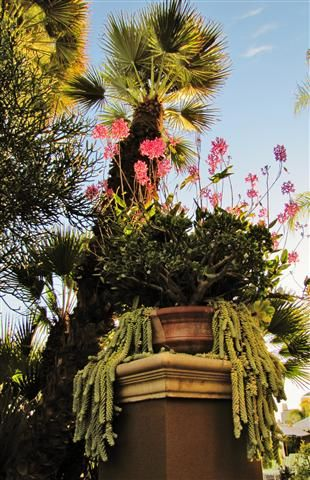 Four Seasons Los Angeles at Beverly Hills garden