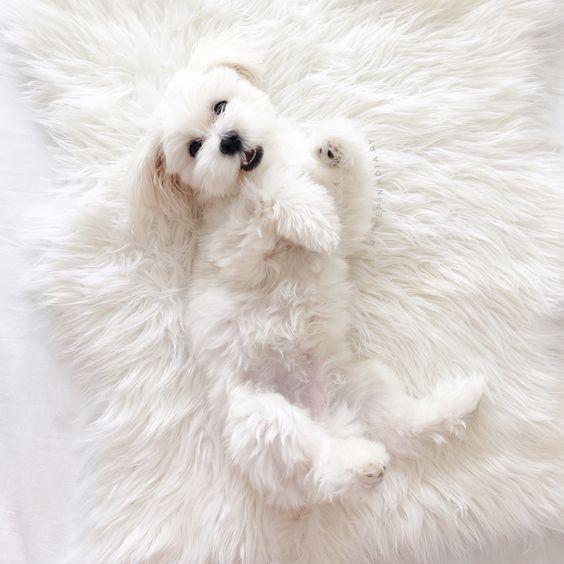 Dog Chewed Up Rug: Puppy, Animals, Dog, Tumblr // Pinterest And Insta