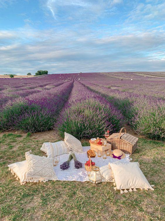 picnic park meadow lilac lavender farm