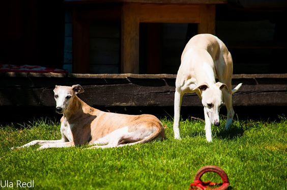Sunshine and  family: Ingrids Garten